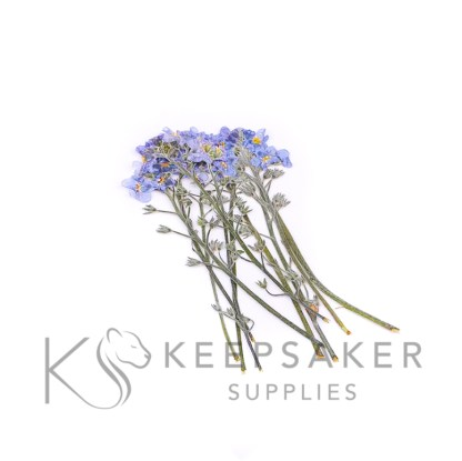 forget me nots on stems, natural at least 10 flowers