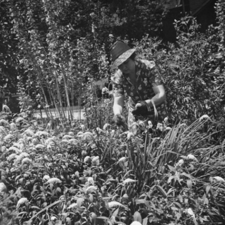 hansel-mieth-mrs-david-smith-working-in-the-garden_i-G-26-2695-VDOUD00Z