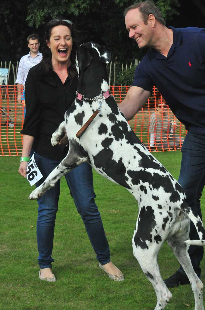 Chiswick-Dog-Show-Great-Dane