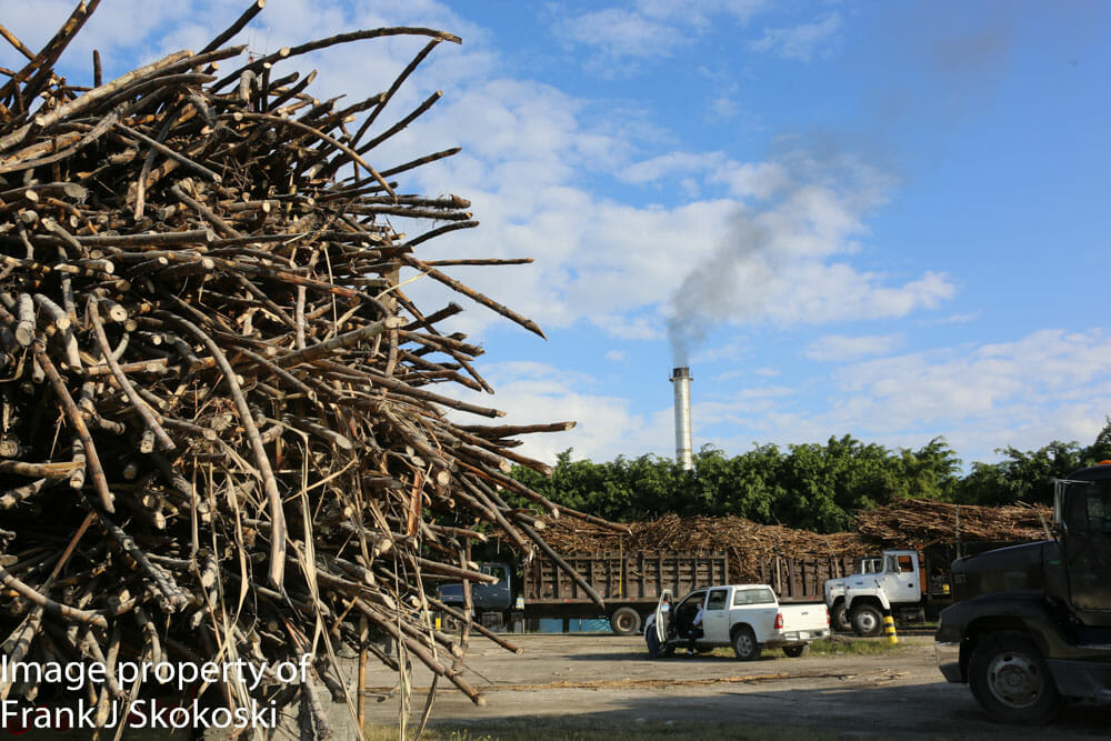 sugar cane (1 of 1)-2