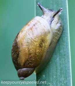 Macro  hike snail 055 (1 of 1)