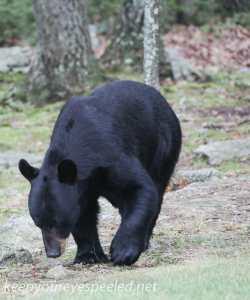 Bear  005 (1 of 1)