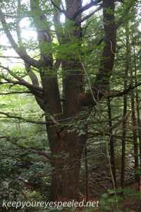 Bear Creek Preserve (16 of 39)