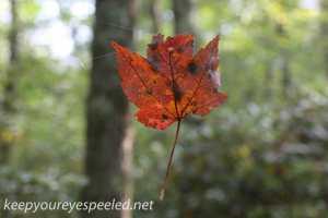 Bear Creek Preserve (22 of 39)