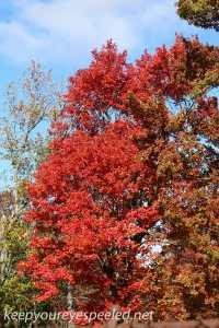 Fall hike (26 of 26)