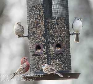 back yard birds-22