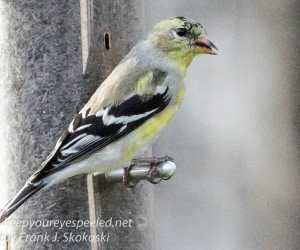 back yard birds-31