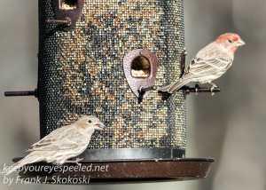 back yard birds-9