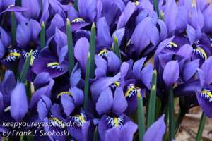 spring flowers -14