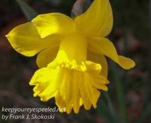 spring flowers -21