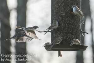 Backyard feeders -14