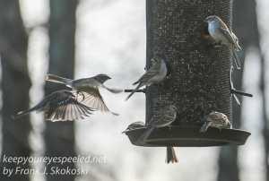 Backyard feeders -14