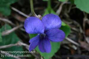 Macro flowers -1