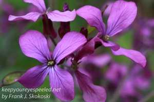 Macro flowers -16