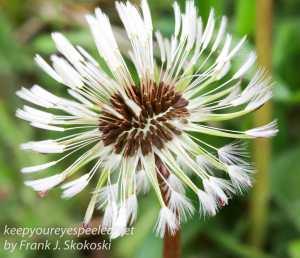 Macro flowers -22