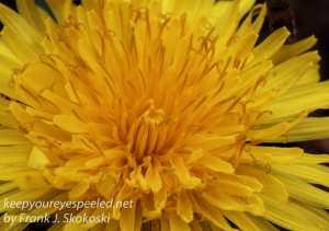 Macro flowers -7