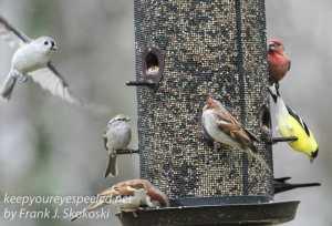 back yard feeders -25