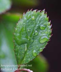 raindrops -1