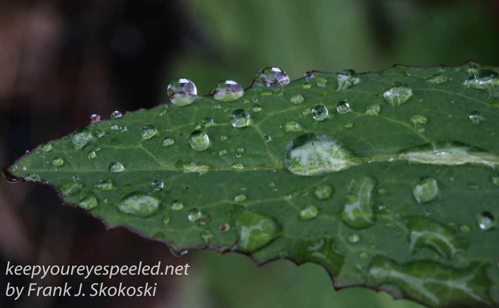 raindrops -28
