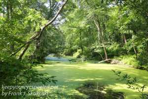 PPL Wetlands -6