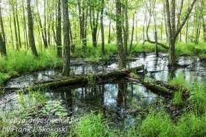 PPL Wetlands -9