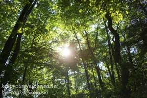 Weiser State Forest -25
