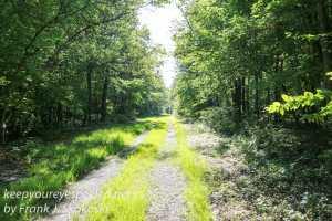 Weiser State Forest -3