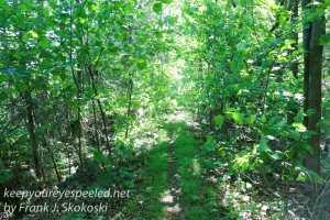 Weiser State Forest -48