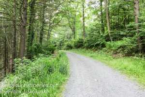 roaring creek hike -2