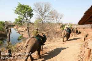 zimbabwe-elephant-ride-9