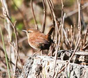 ppl-wetlands-birds-21