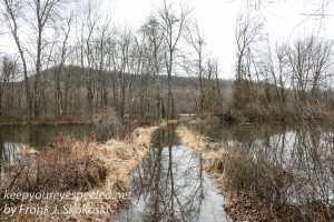 PPL Wetlands-5