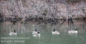 PPL Wetlands wildlife -8