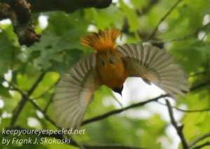 birds -5