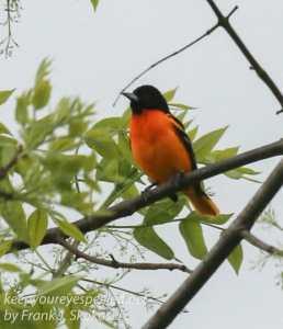 birds PPL Wetlands -22