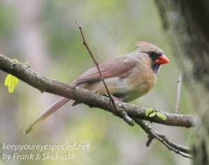 birds PPL Wetlands -3