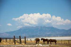 view of horses, clouds and mountains near Great Salt Lake