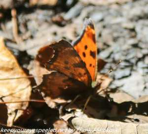 butterfly on leaf on trail