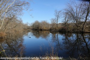 trees and clear blue water at pond at PPL Wetland