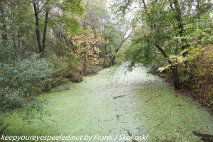 tree lined canal covered in duckweed