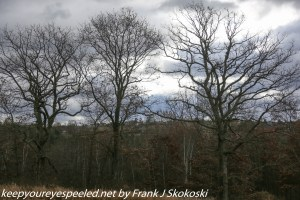 oak trees and clouds