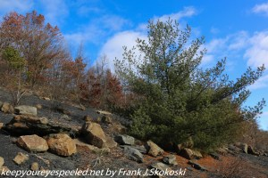 Trees and boulders in strip mine