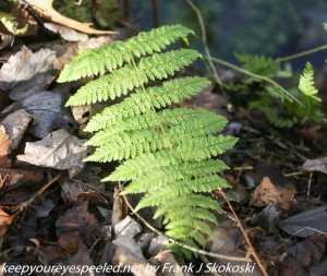 green fern at wetlands