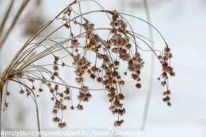 dead plant in snow