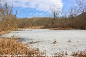 ice covered pond in wetlands