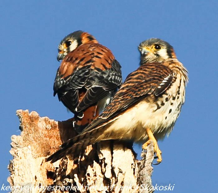 Puerto Rico Day Six Copamarina birds February 132018 (26 of 35)