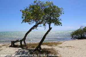 Tree on isolated beach