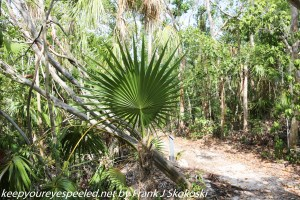 palm fronds on trail
