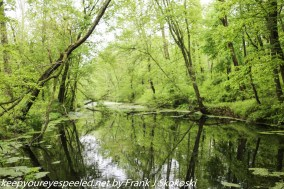 lush green trees along canal in wetlands