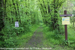 green trees on entrance to trail
